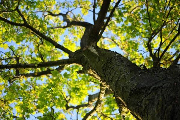 Tree Care Maintenance