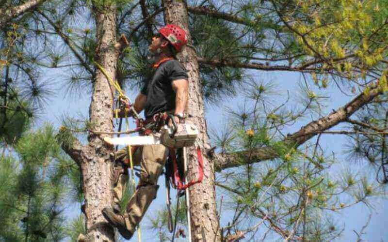 Tree Service Dallas TX