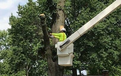 Tree Service Garland TX