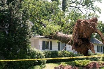 Emergency Tree Service Removal