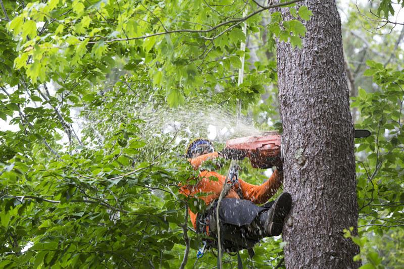 Garland Tree Service