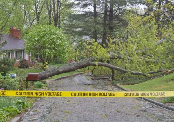 Hazardous Emergency Tree Removal