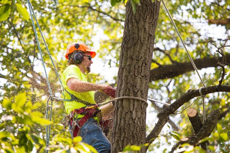 Tree Removal Company North Dallas
