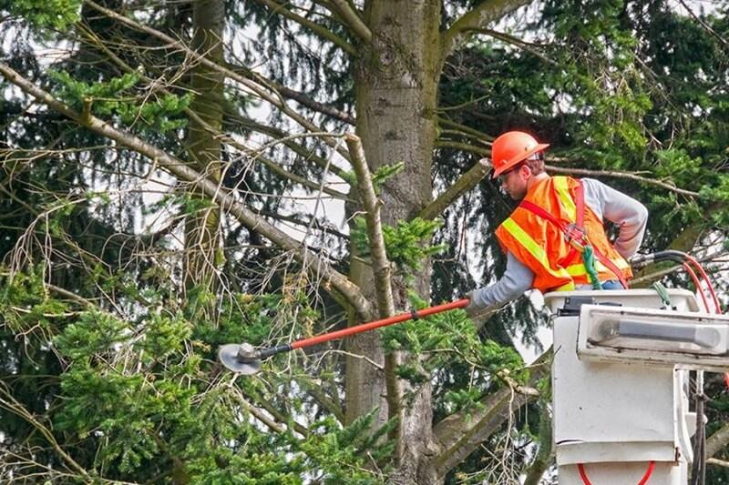 Tree Service Company Garland TX