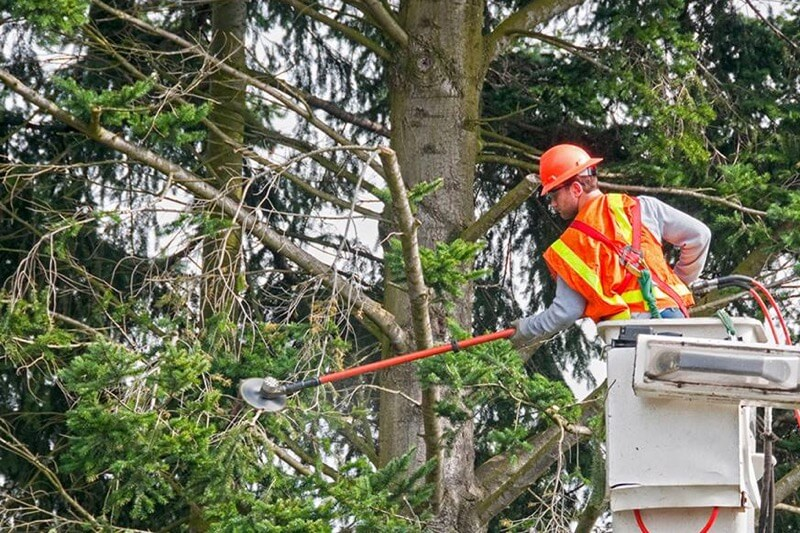 Tree Trimming Pruning Service